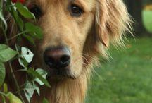 Kutya félék