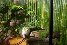 Small Japanese-style balcony / Ideas for creating a mini Japanese garden in a small urban balcony.