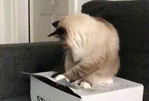 Cat giffs