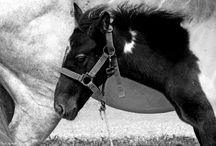 #Horses in #Greece #Kos #Black&White