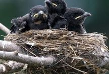 Raven and Nest