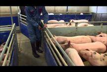 Maatilan eläimiä