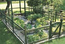 Garden Vegetable Gardening / by Tammi Van