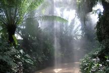 Euphoric forest