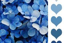 Colour Palettes / by Julie Bull