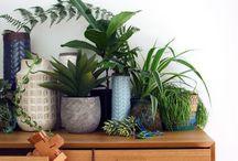 Home - Botanic