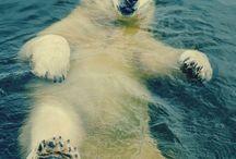 Float Animals