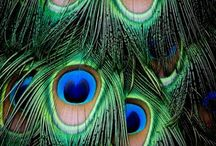 { ✿ Peacock Divine } / Peacock Chic and Such | ✿ be inspired | ✿ polite pinning always appreciated / by Mosquitopress