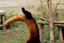 pandas trop funny