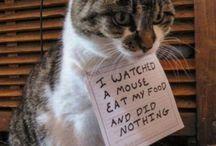 Bad kitty! / Naughty cats being naughty.