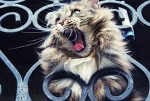Animaux trop mignons / animals