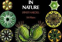 Art Forms in Nature - Haeckel