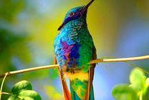 Birds of a feather / Birds / by Trish Addington