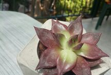 sukulent / cactus and succulents