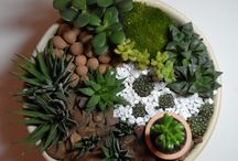 mini garden of secculent