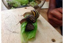 Kindergarten Snail inquiry