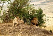 Reserva Natural Masai Mara / Fotografías de Udare o facilitadas por los viajeros