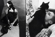 Andy Biersack's Cat