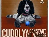 Spaniel Gifts / Look no further than The Country Catalogue for a range of Spaniel Themed Gifts.