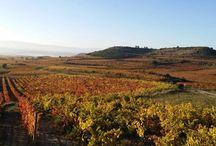 Spanish vineyards' landscapes / Paisajes de viñedos españoles Paysages de vignes Landschaft mit weinbergen