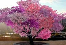 arbre new-yorkais donne après plusieurs grèffes 40 espèces de fruits chaque année