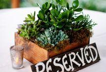 Rockroses & succulents