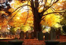feels like fall / by Lisa Leonard Designs