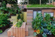Small gardens for urban