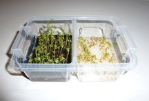 Experiments with cress seeds / Due to the 'easy to grow' nature of cress seeds, many experiments have been conducted.