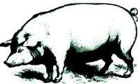 Homestead Hogs
