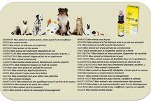 Animaux / Bien-être de nos animaux