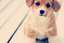 everything cute and lovable