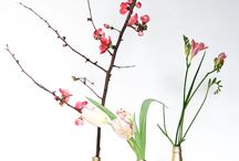 belle blooms / Flowers, sprigs and twigs, blossoms and blooms, greenery, planters and vases of all kinds