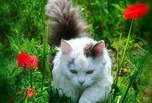 Cicák(Cats)