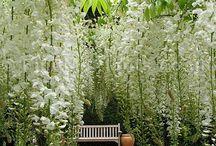 Gardens/outdoor