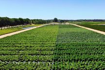 Viveiros - Mira / Here you can see some pictures of our nurseries, located in Mira