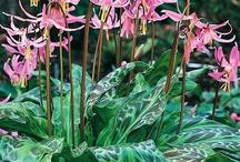 gardening / by DeAnn Blackard