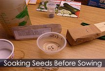 Seed Scarification Method - Steps / How to scarify seeds. Detailed instructions about seed scarification process. Idea for making a scuffer. Soaking seeds before planting.