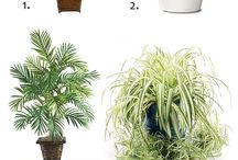 Plants Galore / Urban Planting / by Janeline Hayes-Cahill