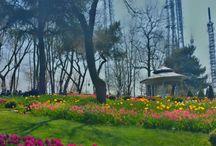 mine / #tulips#chandelier#twigs