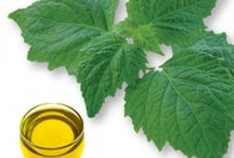 Indonesian Patchouli Oil