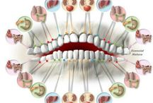 зубы и болезни органов