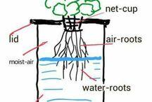 hydroponics Will it Kratky