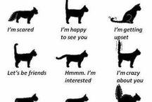 Miksi kissat ovat ihania