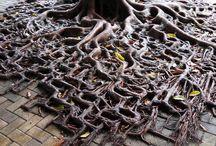 Élő fák