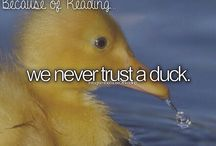 The Mortal Instruments---Here Come the Ducks