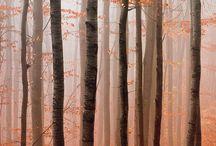500px Autumn / by Hiroaki N