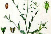 сьедобные растения