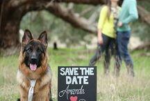 Bruiloft en dieren