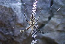 webs & spiders